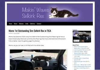 Portfolio Example - Makinwaves Selkirk Rex