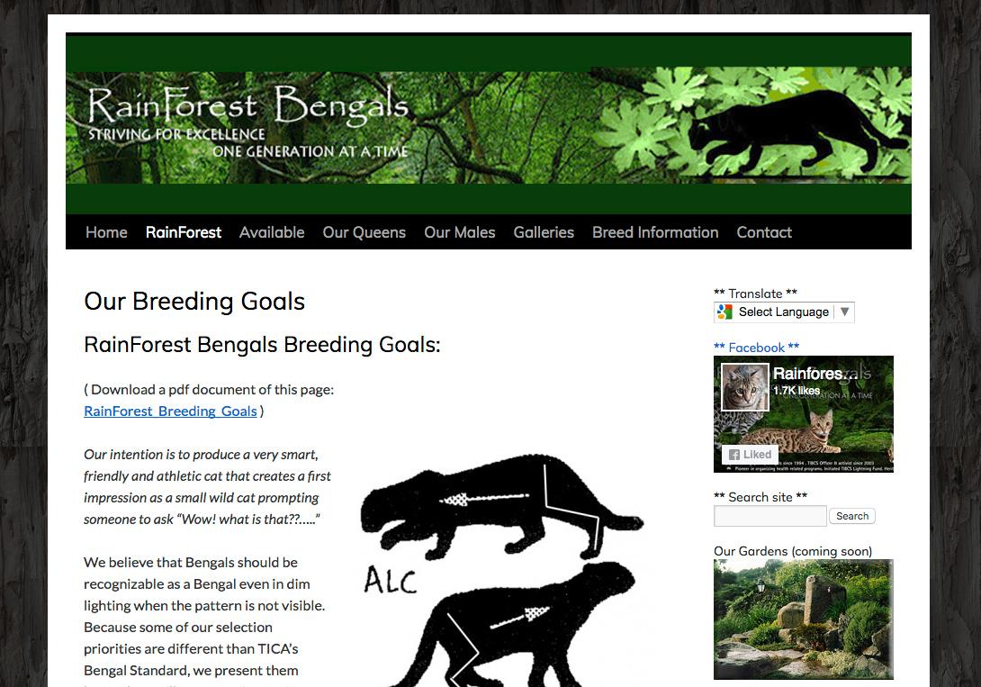 Portfolio Example - Rainforest Bengals