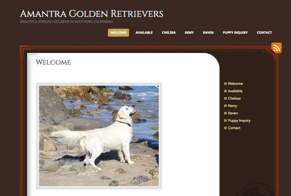 Portfolio Example - Amantra English Goldens