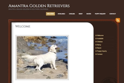 Portfolio Example - Amantra English Goldens