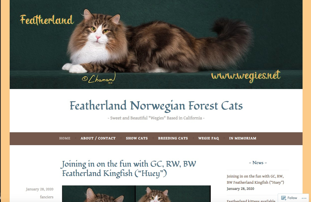Example - Featherland Norwegian Forest Cats